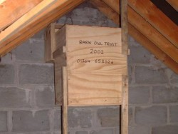 Suitable Positions Barn Owl Indoor Nestboxes 15