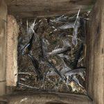 Tawny Owl Nestbox Nest Debris LLP Wildlife Diary June 2019