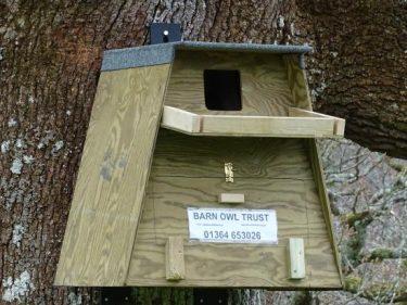 Tree Nestbox On Plastic Hangers