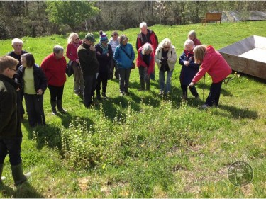 Wild Flower Walk 29th April 15 (12)