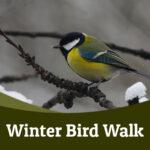 Winter bird walk 2