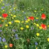 Winter Bird Crop Flowers LLP Wildlife Diary June 2018