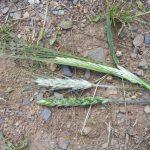 Winter Bird Crop Plants LLP Wildlife Diary August 2019
