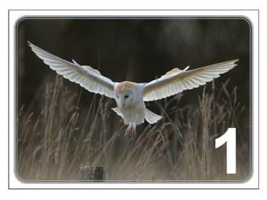 Barn Owl Christmas Card Light Landing