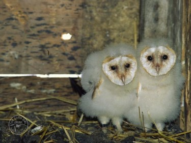 Where do Barn Owls live? - Missing word puzzle