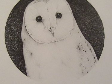 Barn Owl Pencil Drawing