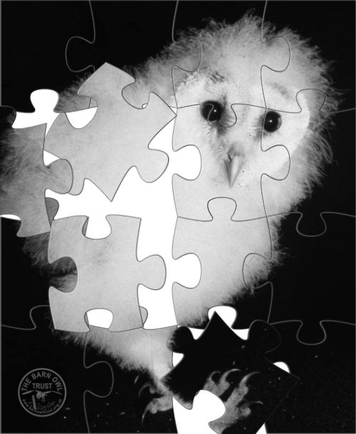 Barn Owlet Jigsaw Puzzle Pieces