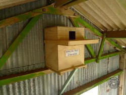 Barn Owl nestbox Best Place Indoor