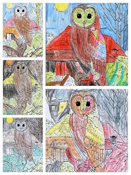 Owl colouring pictures by Birdham Primary School