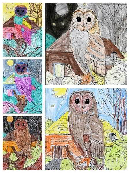 Owl pictures by Birdham Primary School