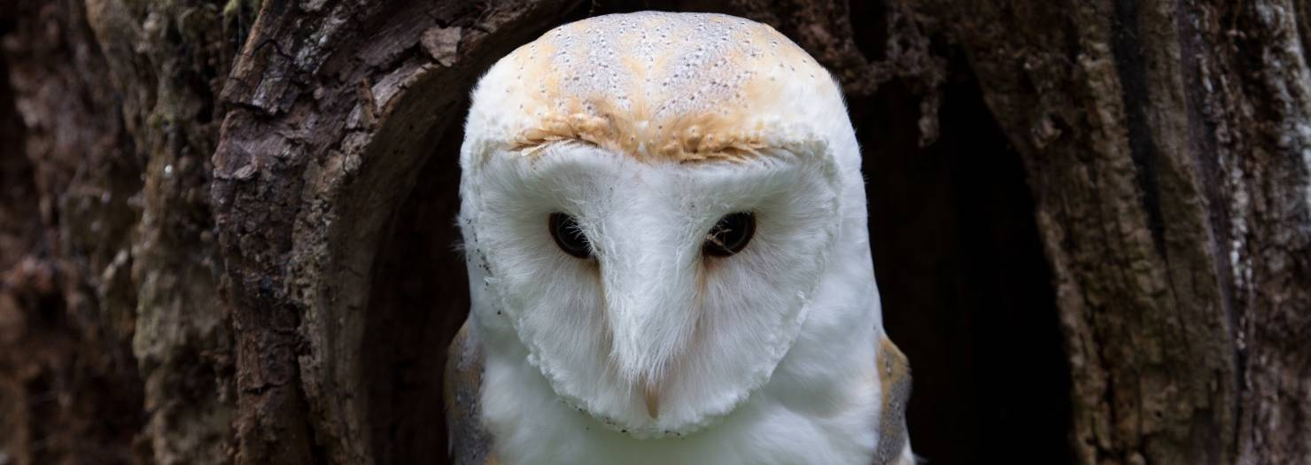 Booking Barn Owl Baley