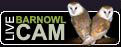 Live Barnowl webcam direct from a barnowl nestbox at our Owl Sanctuary
