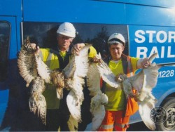 Campaigns Owl Road Deaths