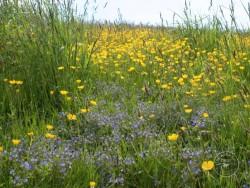 Flowers Of Rough Grassland 2