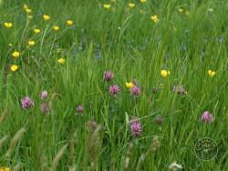 Flowers Of Rough Grassland 3