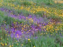 Flowers Of Rough Grassland 4