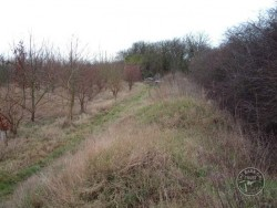 Good Barn Owl Habitat 06