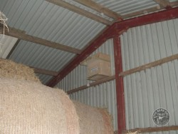 Indoor Barn Owl Nestboxes Erected Modern Farm Building