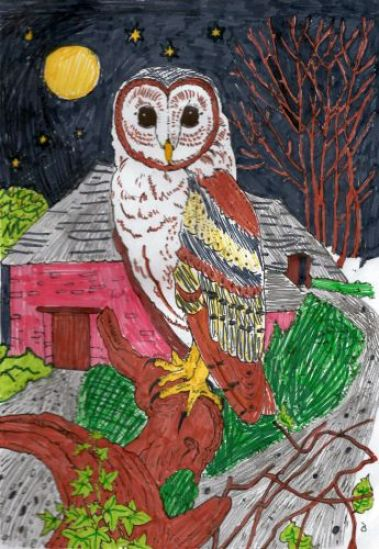 Owl colouring page by Jude