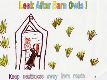 Keep Nestbox Away From Roads Poster