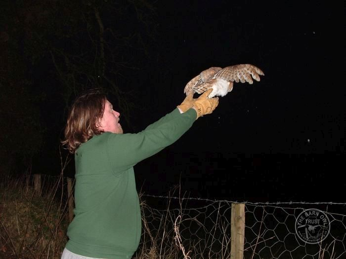 Keeping and release of Barn Owls - The Barn Owl Trust