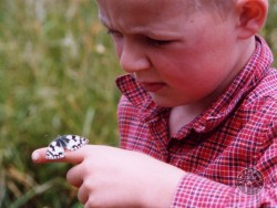 Lennon Legacy Project Boy With Butterfly Marbled White