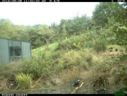 Lennon Legacy Project First Kingfisher Photo