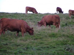 Manage Land Cattle Grazing