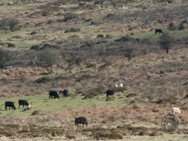 Manage Land Rough Grazing
