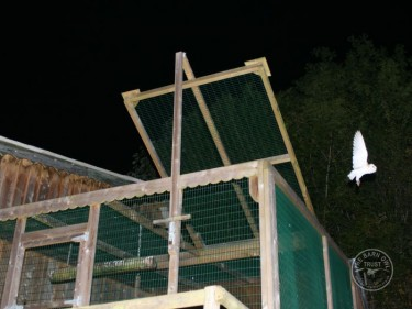 Barn Owl Supported Release