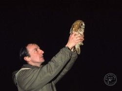 Tawny Owl Cold Release 1