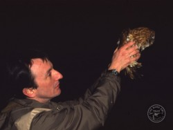 Tawny Owl Cold Release 2