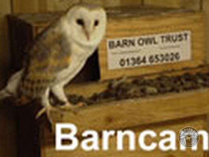 owl_cams_ webcam_owlcams_barncam_icon