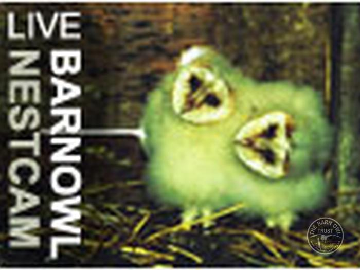 owl_cams_webcam_owlcams_nestcam_icon