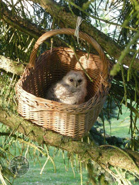 Pass It On Tawny Owlet Basket