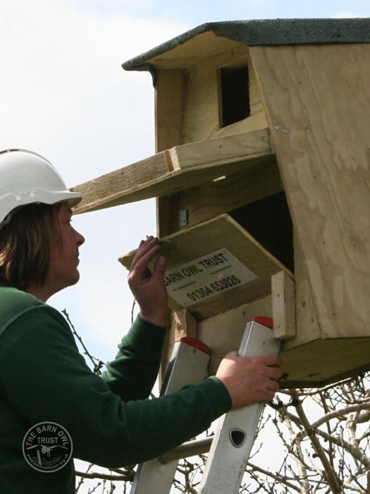 Barn Owl Nestbox Design Access Panel