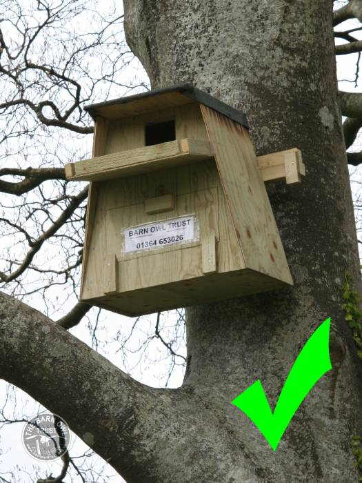 Poor Barn Owl Nestbox Design The Barn Owl Trust