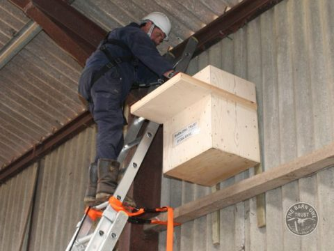 Projects Barn Owl Trust Nestbox Erection