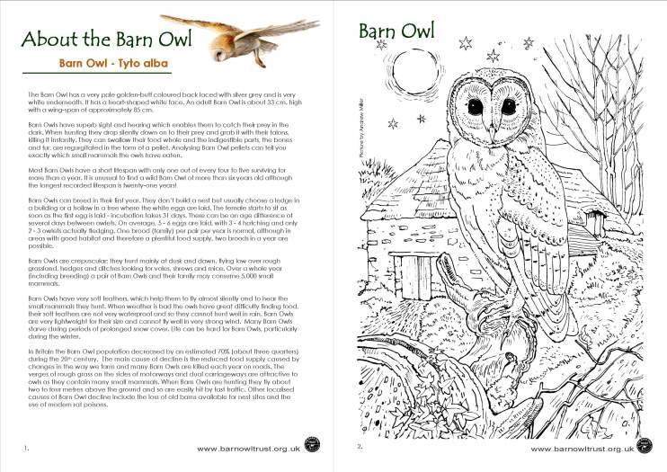 Barn Owl conservation: Lesson planning ideas - The Barn Owl Trust