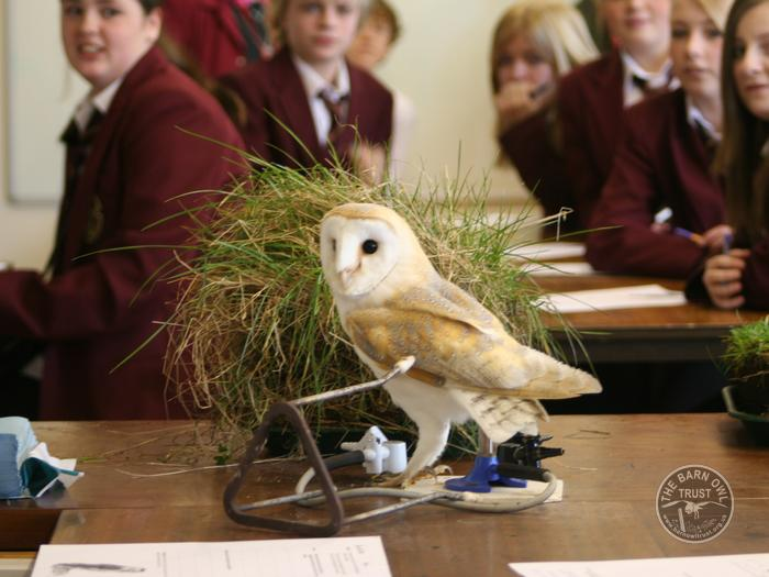 Barn Owl talks for schools and young people - The Barn Owl ...
