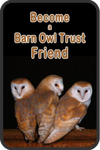 Where's the best place for your Barn Owl nestbox?