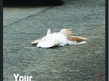 Sidebar 2 Dead On Road