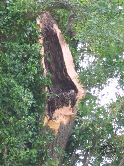 Site Loss Damaged Hollow Tree