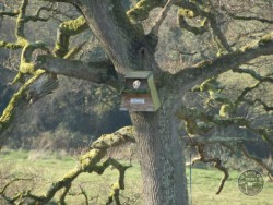 Barn Owl boxes Tree Nestboxes