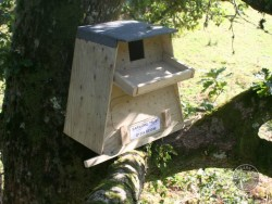 Tree owl boxes Fixed