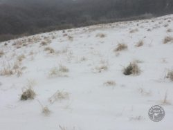 Tussocks Above Snow 2nd March 2018