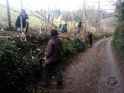 Volunteer Vacancies Hedge Laying