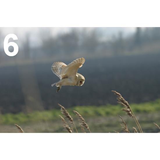 Barn Owl Trust In Search Of Prey A6 Card