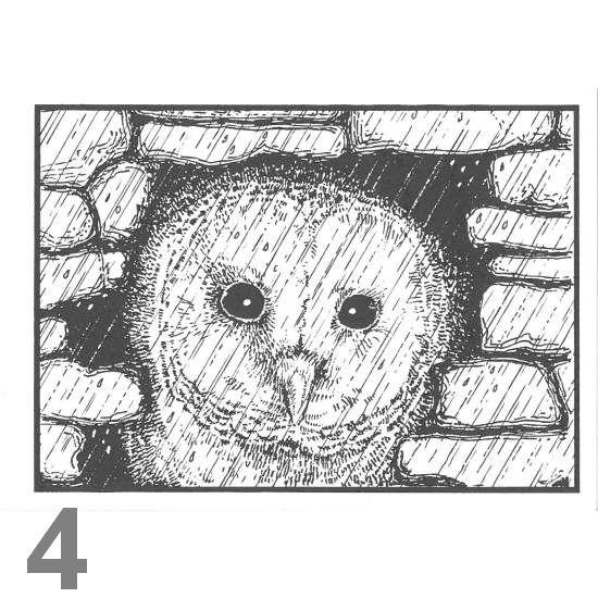 Barn Owl Trust November A6 Black & White Card