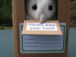 Barn Owl Trust Owlet In Box